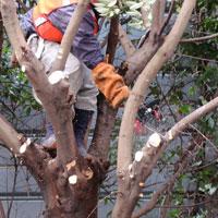 大木の伐採や枝下ろし