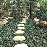 和風庭園4